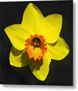 Flower - Id 16235-220251-6209 Metal Print