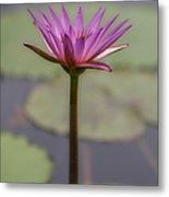 Flower In A Pond Metal Print