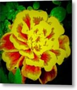 Flower In Abstract With Black Background Metal Print