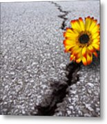Flower In Asphalt Metal Print