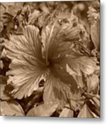 Flower In Sepia Metal Print
