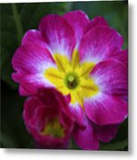 Flower In Spring Metal Print
