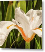 Flower In The Grass Metal Print