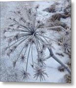 Flower In Winter Metal Print