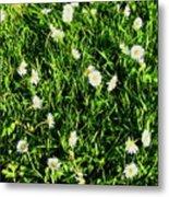 Flower Kissed Fields Metal Print