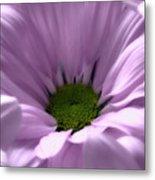 Flower Macro Beauty 3 Metal Print
