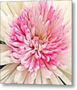 Flower Macro. Metal Print