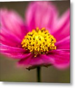 Flower Macro Metal Print