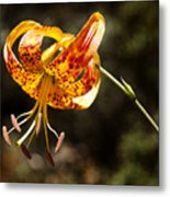 Flower Of Beauty Metal Print