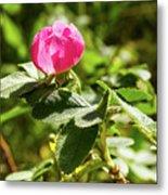 Flower Of Eglantine - 2 Metal Print