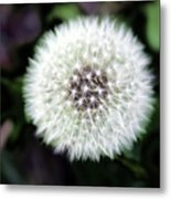 Flower Of Flash Metal Print