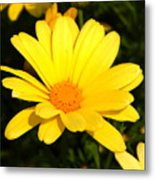 Flower Of Sunshine Metal Print