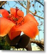 Flower Of The Red Silk Cotton Tree  Metal Print
