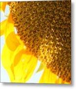 Flower Of The Sun Metal Print