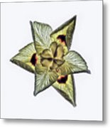 Flower Of Triangles Metal Print