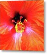 Flower On Fire Metal Print