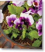 Flower - Pansy - Purple Pansies Metal Print