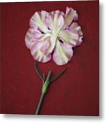 Flower Petals And Broken Stem Metal Print