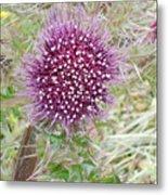 Flower Photograph Metal Print