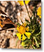 Flower Power Bug And Butterfly Metal Print