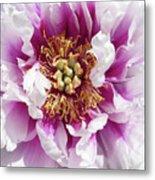 Flower Power In Pink Metal Print