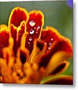 Flower Rain Drops Metal Print