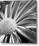 Flower Run Through It Black And White Metal Print