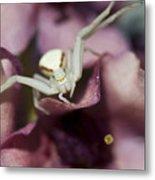 Flower Spider Metal Print