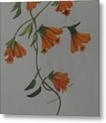 Flower Stem Plucked From Neighbours Garden Metal Print