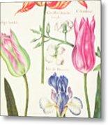 Flower Studies  Tulips And Blue Iris  Metal Print