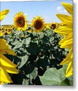 Flower Sunflower,yellow Flower, Metal Print