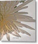 Flower-white Metal Print