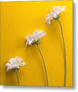 flower, white, three, online, Yellow Background, lateral, vertic Metal Print