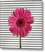 Flower With Lines Metal Print