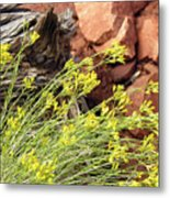 Flower Wood And Rock Metal Print