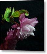 Flowering Almond 2011-15 Metal Print