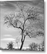 Trees Are Talking To Us Metal Print