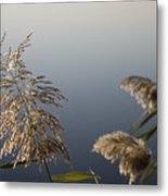 Flowering Cane Plant Metal Print