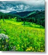 Flowering Colorado Mountain Meadow Metal Print