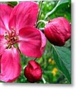 Flowering Crab Apple Metal Print