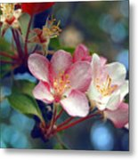 Flowering Crab Metal Print