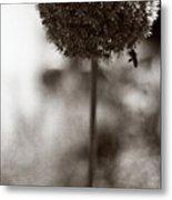 Flowering Garlic Metal Print