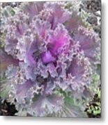 Flowering Kale Metal Print