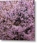 Flowering Pink In Spring Metal Print