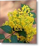 Flowering Plant 032514a Metal Print