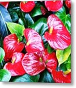 Flowering Plant Metal Print