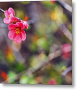 Flowering Quince In Spring Metal Print