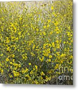 Flowering Tarweed Metal Print