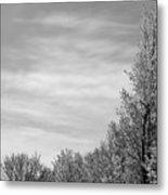 Flowering Trees Metal Print