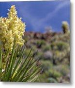 Flowering Yucca Metal Print